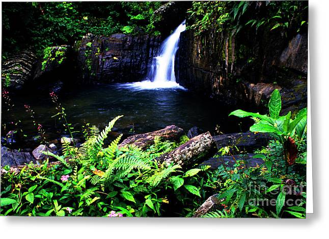 Puerto Rico Greeting Cards - Ferns Flowers and Waterfall Greeting Card by Thomas R Fletcher