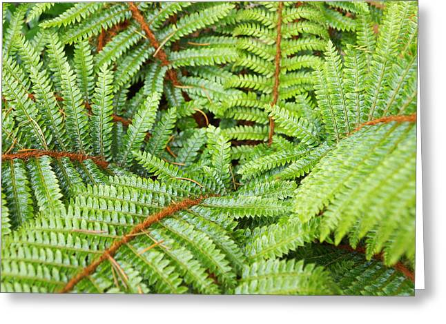 Ferns Forest Art Prints Green Fern Fronds Greeting Card by Baslee Troutman