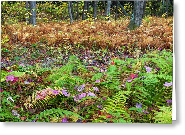 Forest Floor Greeting Cards - Ferns of Fall Greeting Card by Bill  Wakeley
