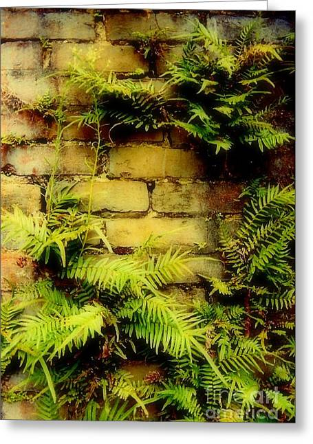 New Orleans Louisiana Plant Framed Prints Greeting Cards - Ferns Of Mortar  Greeting Card by Michael Hoard