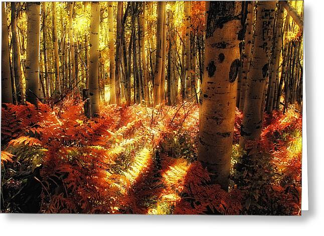 Ferns On The Forest Floor Greeting Card by Teri Virbickis