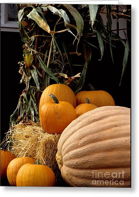 Festive Fall Greeting Card by Sharon Elliott
