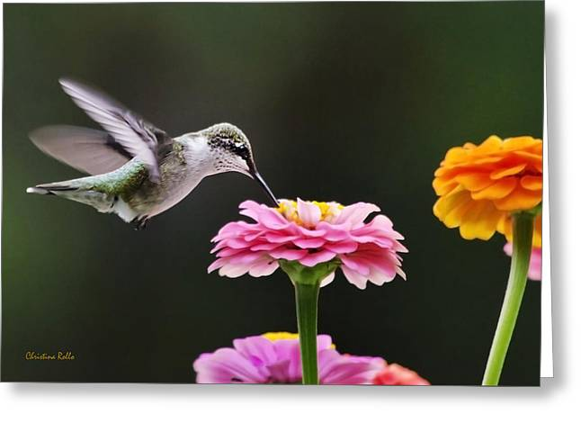 Best Sellers -  - Hovering Greeting Cards - Few And Far Between Greeting Card by Christina Rollo