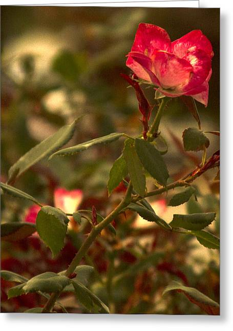 Photographs With Red. Greeting Cards - Ff-06 Greeting Card by David Yocum