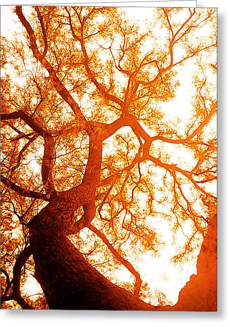 Gelb Greeting Cards - Fibonacci Tree Greeting Card by Jose Espinoza