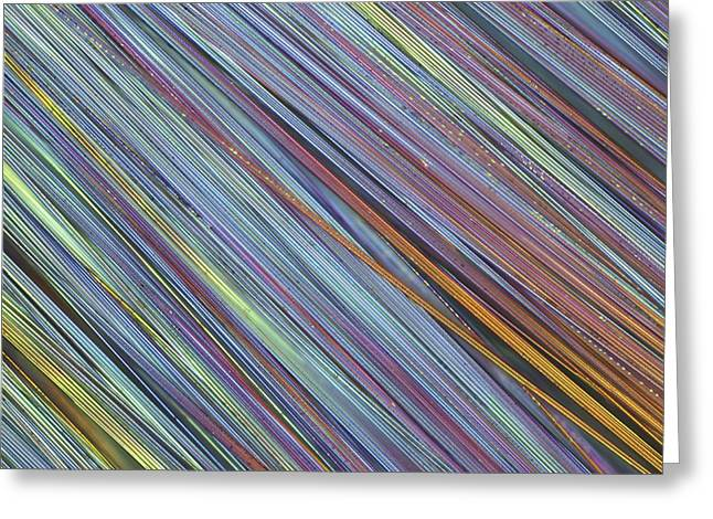 Fibreglass, Light Micrograph Greeting Card by Science Photo Library
