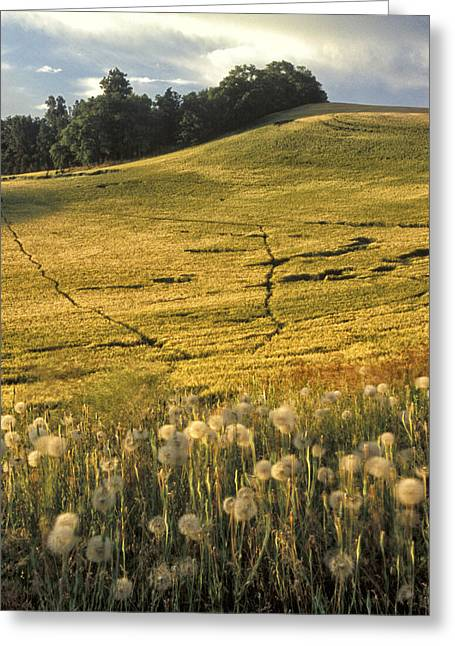 Landscape. Scenic Greeting Cards - Field and Weeds Greeting Card by Latah Trail Foundation