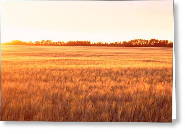 Cultivation Greeting Cards - Field Canada Greeting Card by Panoramic Images