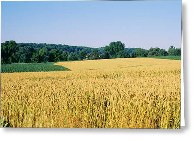 Md Greeting Cards - Field Crop, Maryland, Usa Greeting Card by Panoramic Images