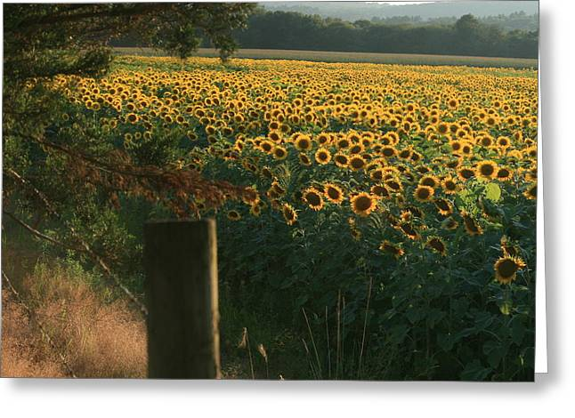 Neal Eslinger Greeting Cards - Field Dreams No.2 Greeting Card by Neal  Eslinger