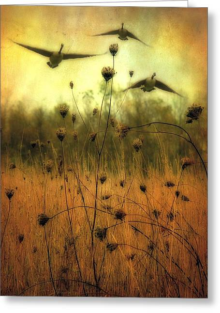 Water Fowl Greeting Cards - Field Dwellers  Greeting Card by Gothicolors Donna Snyder
