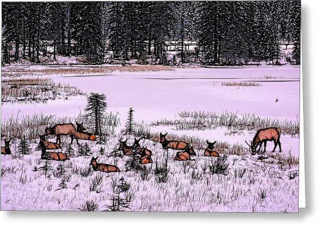 Grazing Snow Greeting Cards - Field Herd Greeting Card by Reckless Capture