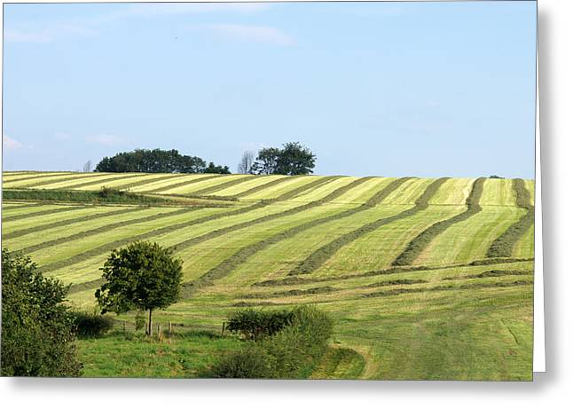 Limburg Greeting Cards - Field In Summertime Greeting Card by Jolly Van der Velden