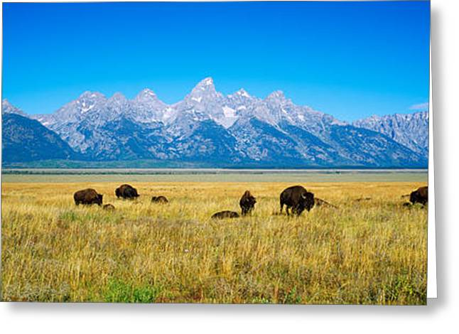 Groups Of Animals Greeting Cards - Field Of Bison With Mountains Greeting Card by Panoramic Images