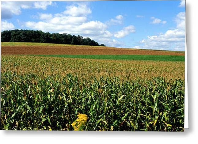 Cultivation Greeting Cards - Field Of Corn With Tractor In Distance Greeting Card by Panoramic Images