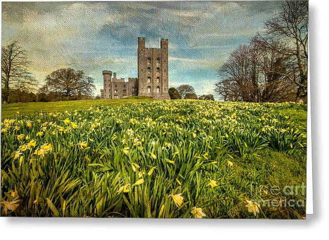 Daffodils Greeting Cards - Field Of Daffodils Greeting Card by Adrian Evans