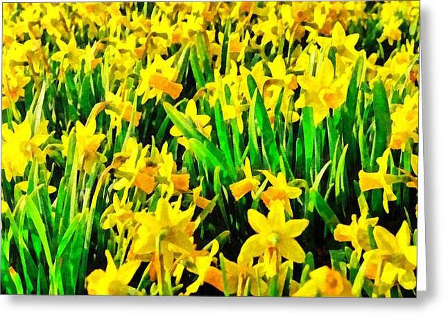Phipps Conservatory Greeting Cards - Field of Daffodils Greeting Card by Digital Photographic Arts