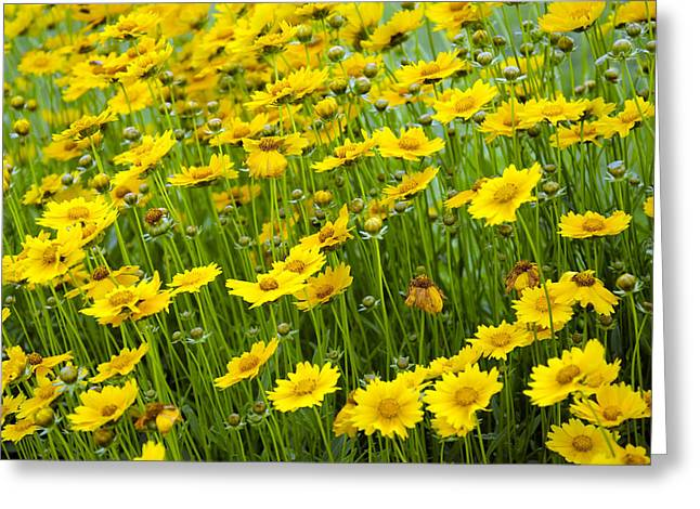 Outdoor Life Art Prints Greeting Cards - Field Of Daisies Greeting Card by Ricky Barnard