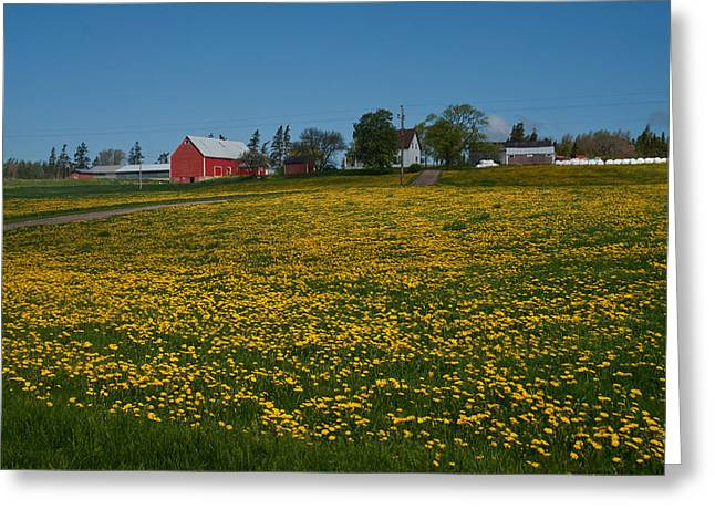 Lions Greeting Cards - Field Of Dandelions Greeting Card by Guy Heitmann