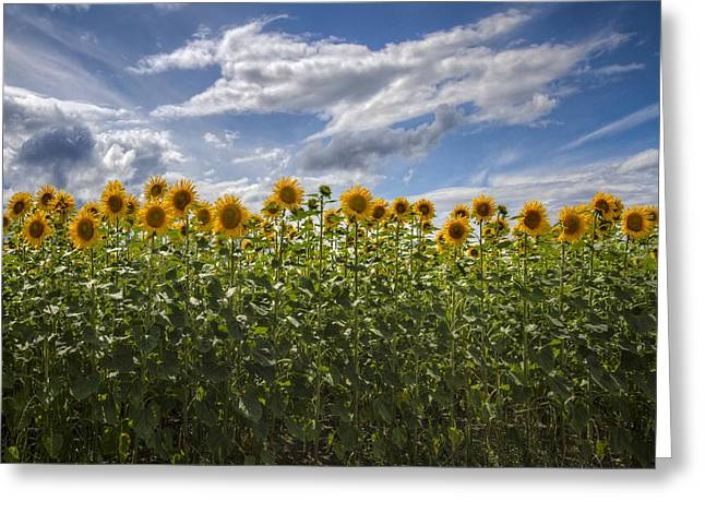 Swiss Photographs Greeting Cards - Field of Dreams Greeting Card by Debra and Dave Vanderlaan