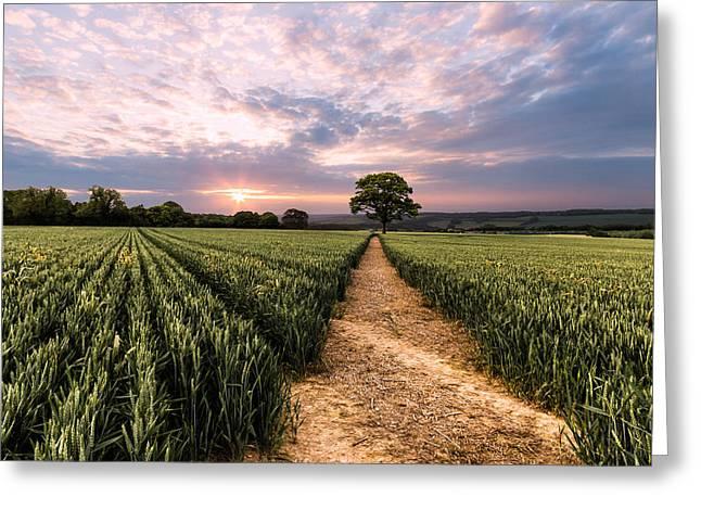 Oak Tree Greeting Cards - Field of dreams Greeting Card by Ian Hufton