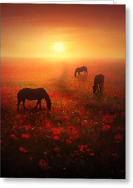 Horse Artist Greeting Cards - Field of Dreams Greeting Card by Jennifer Woodward