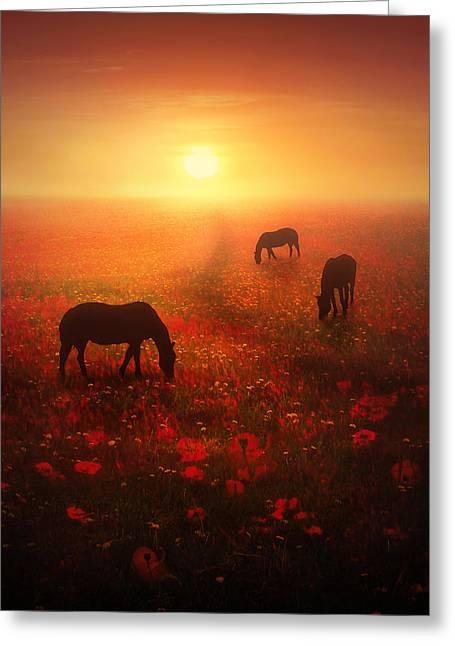 Field Of Dreams Greeting Card by Jennifer Woodward