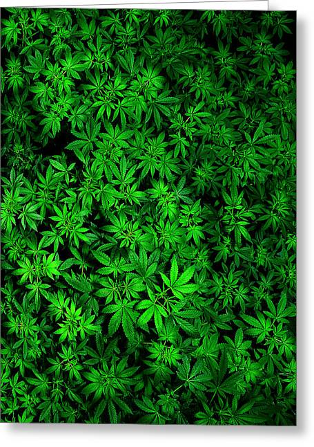Cannibus Greeting Cards - Field of Dreams Greeting Card by RC Horsch