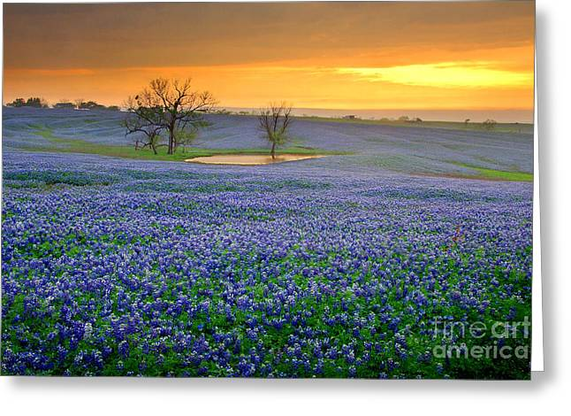 Texas Wild Flowers Greeting Cards - Field of Dreams Texas Sunset - Texas Bluebonnet wildflowers landscape flowers  Greeting Card by Jon Holiday