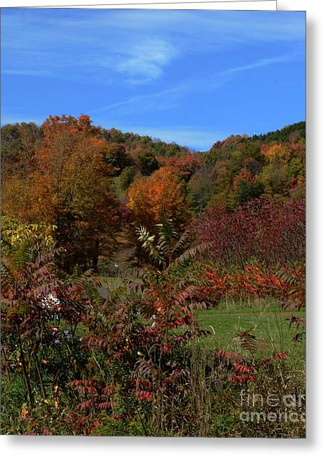 Struckle Greeting Cards - Field Of Fall Colors Greeting Card by Kathleen Struckle