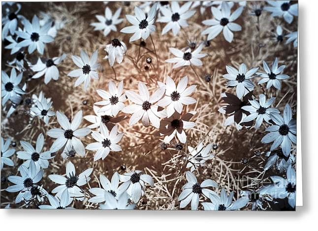 Black Eyed Susan Print Greeting Cards - Field of Flowers infrared Greeting Card by John Rizzuto