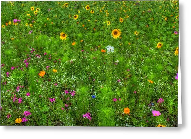 Peaceful Scene Greeting Cards - Field of Wildflowers Greeting Card by Joann Vitali