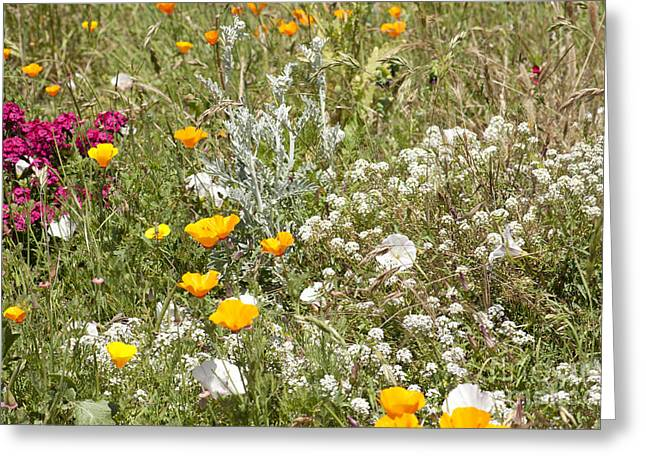 Laura Wrede Greeting Cards - Field of Flowers Greeting Card by Artist and Photographer Laura Wrede