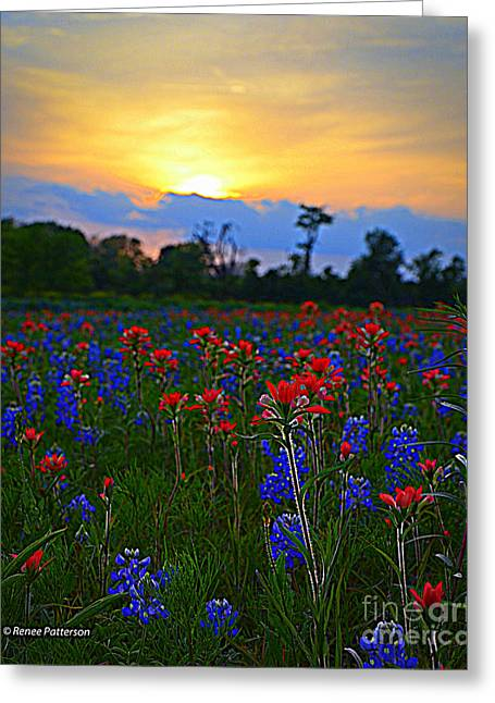 Wild Flowers Of Texas Greeting Cards - Field of Flowers Greeting Card by Renee Patterson