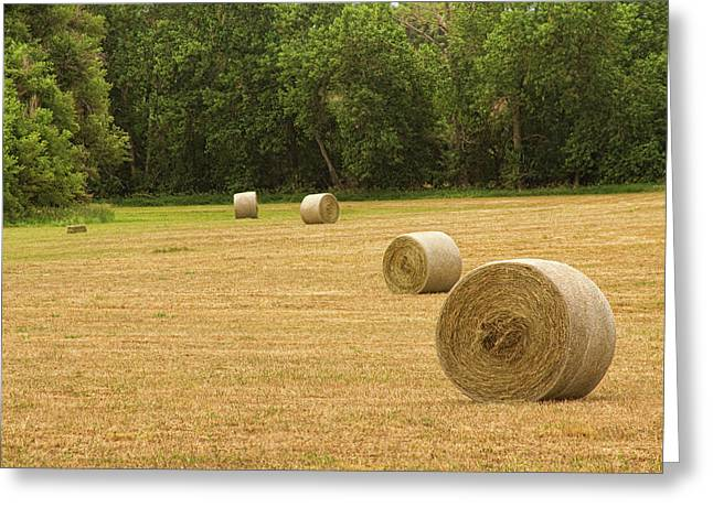 Hay Bales Greeting Cards - Field of Freshly Baled Round Hay Bales Greeting Card by James BO  Insogna