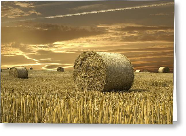 Hay Bales Pyrography Greeting Cards - Field of gold Greeting Card by Anna Kaminska