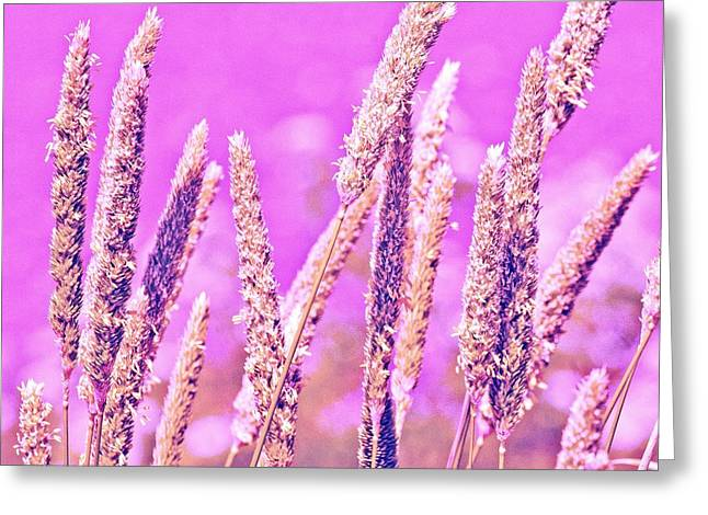 Field of Grass and Wildflowers Greeting Card by Artist and Photographer Laura Wrede