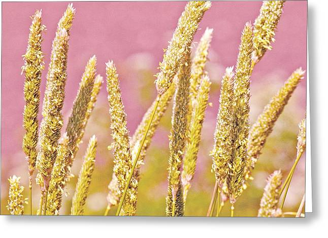 Field of Grass and Wildflowers III Greeting Card by Artist and Photographer Laura Wrede