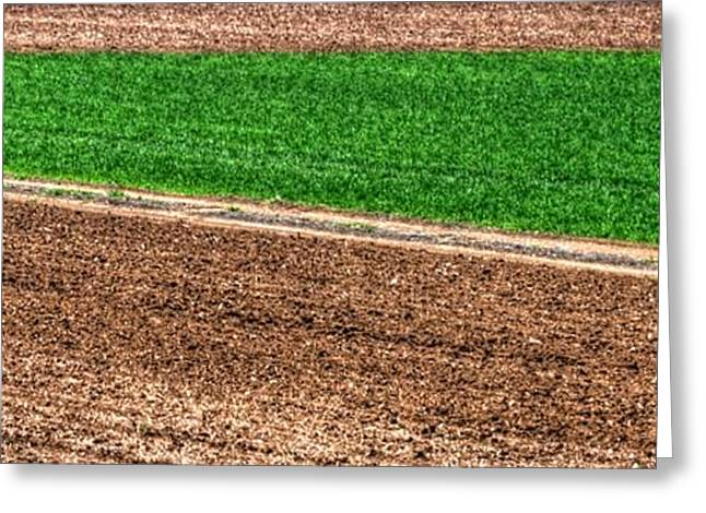 Farmers Field Greeting Cards - Field of Green 14552 Greeting Card by Jerry Sodorff