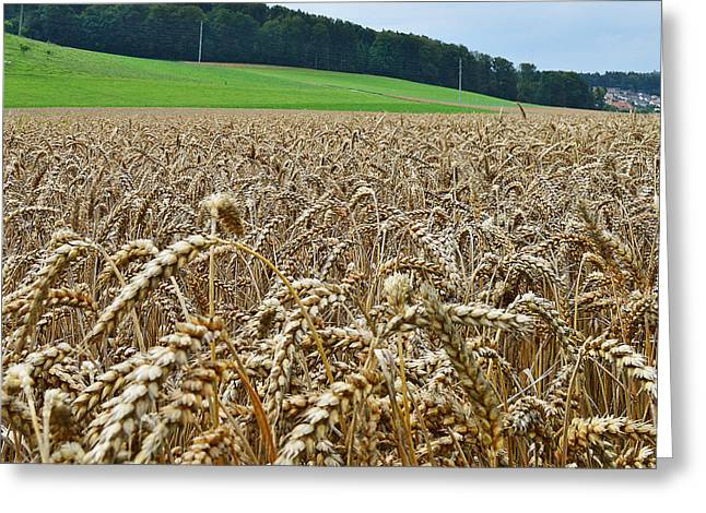 Paradise Road Greeting Cards - Field of Hope Greeting Card by Felicia Tica