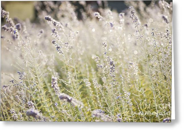 Laura Wrede Greeting Cards - Field of Lavender at Clos LaChance Vineyard in Morgan Hill CA Greeting Card by Artist and Photographer Laura Wrede
