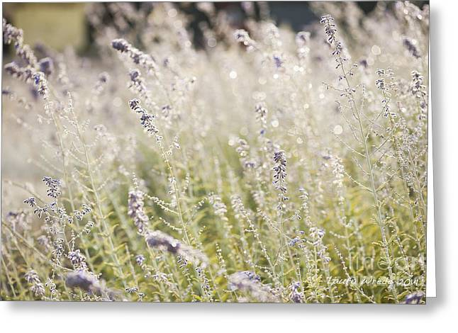Field Of Lavender At Clos Lachance Vineyard In Morgan Hill Ca Greeting Card by Artist and Photographer Laura Wrede