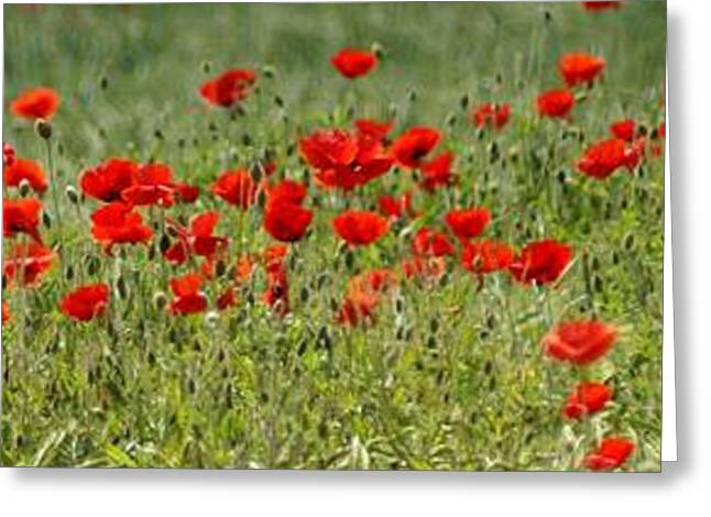 Blooms Greeting Cards - Field of poppies Greeting Card by Carol Lynch