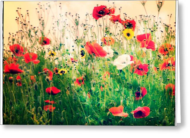 Ww1 Greeting Cards - Field of Poppys Greeting Card by Karen Lawrence  SMPhotography