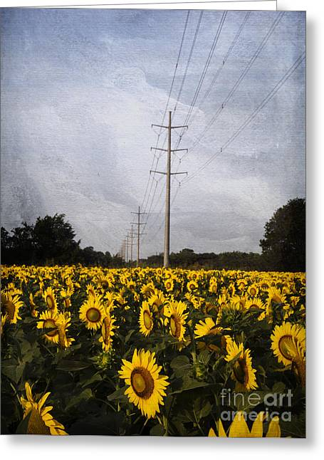 Inflorescence Greeting Cards - Field of sunflowers Greeting Card by Elena Nosyreva