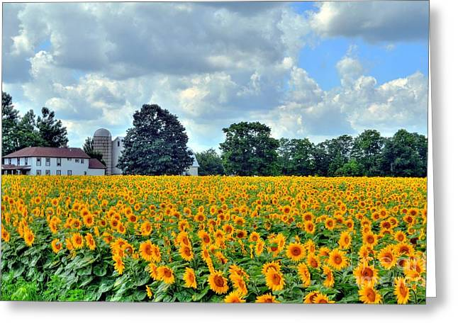 Field Of Sunflowers Greeting Card by Kathleen Struckle