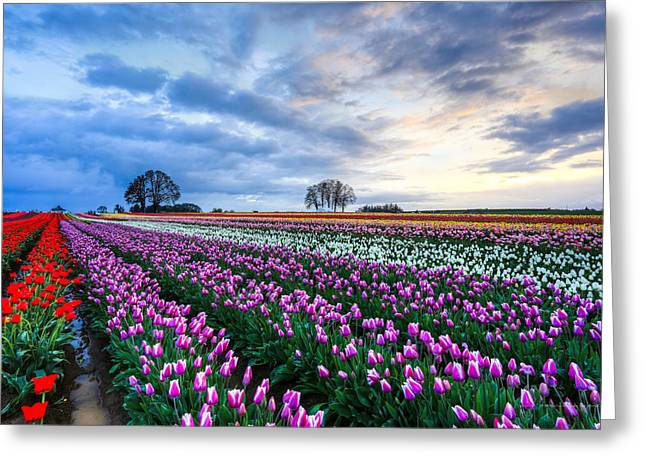 Filipino Artists Greeting Cards - Field of Tulips - 2013 Annual Tulip Fest Greeting Card by Rusty Muyuela