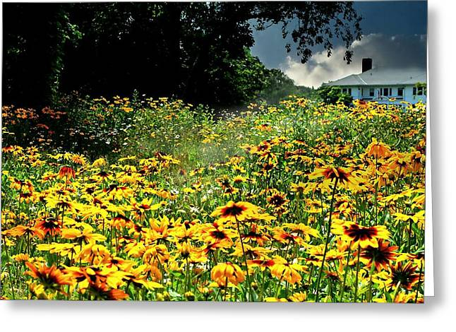 Garden Of Daisies Greeting Cards - Field of Vision Greeting Card by Diana Angstadt