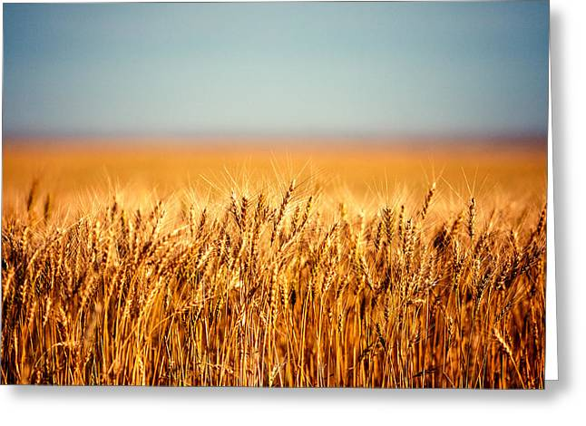 Field Of Wheat Greeting Card by Todd Klassy