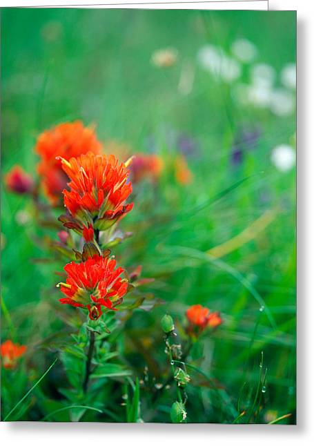 Medium Flowers Greeting Cards - Field Of Wildflowers With Indian Greeting Card by Panoramic Images